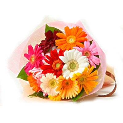 12 Multicolor Gerbera Bunch