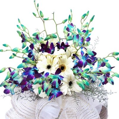 12 Blue Orchids Bunch