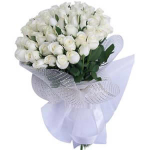 50 white roses wrapped with white paper for sympathy white purity mightylinksfo