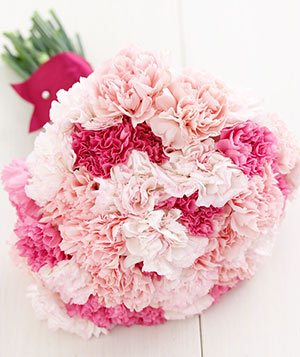 24 Light and Dark Pink Carnations