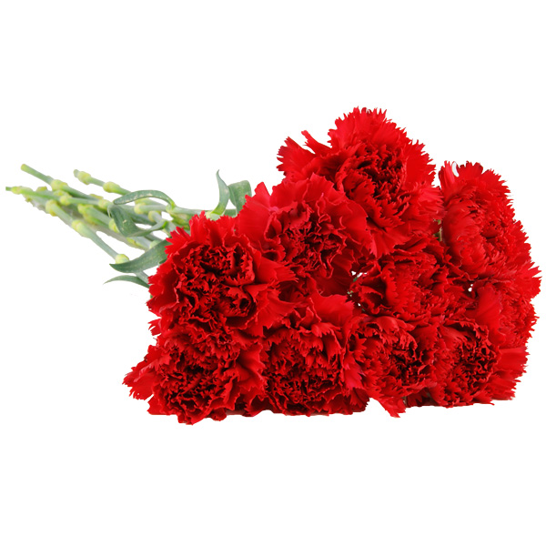Red Carnations Low Cost Flowers