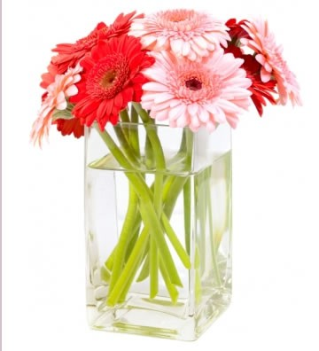 10 Red and Pink Gerbera with Vase
