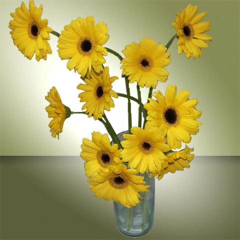 Yellow colour flowers choice image flower decoration ideas designer gerbara flowers vase 12 yellow gerbera and vase mightylinksfo mightylinksfo