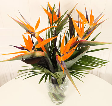 5 Strelitzia with Vase