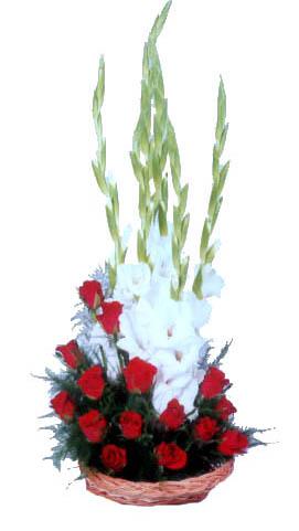 Gladiolus Online Gladiolus Flowers Delivery