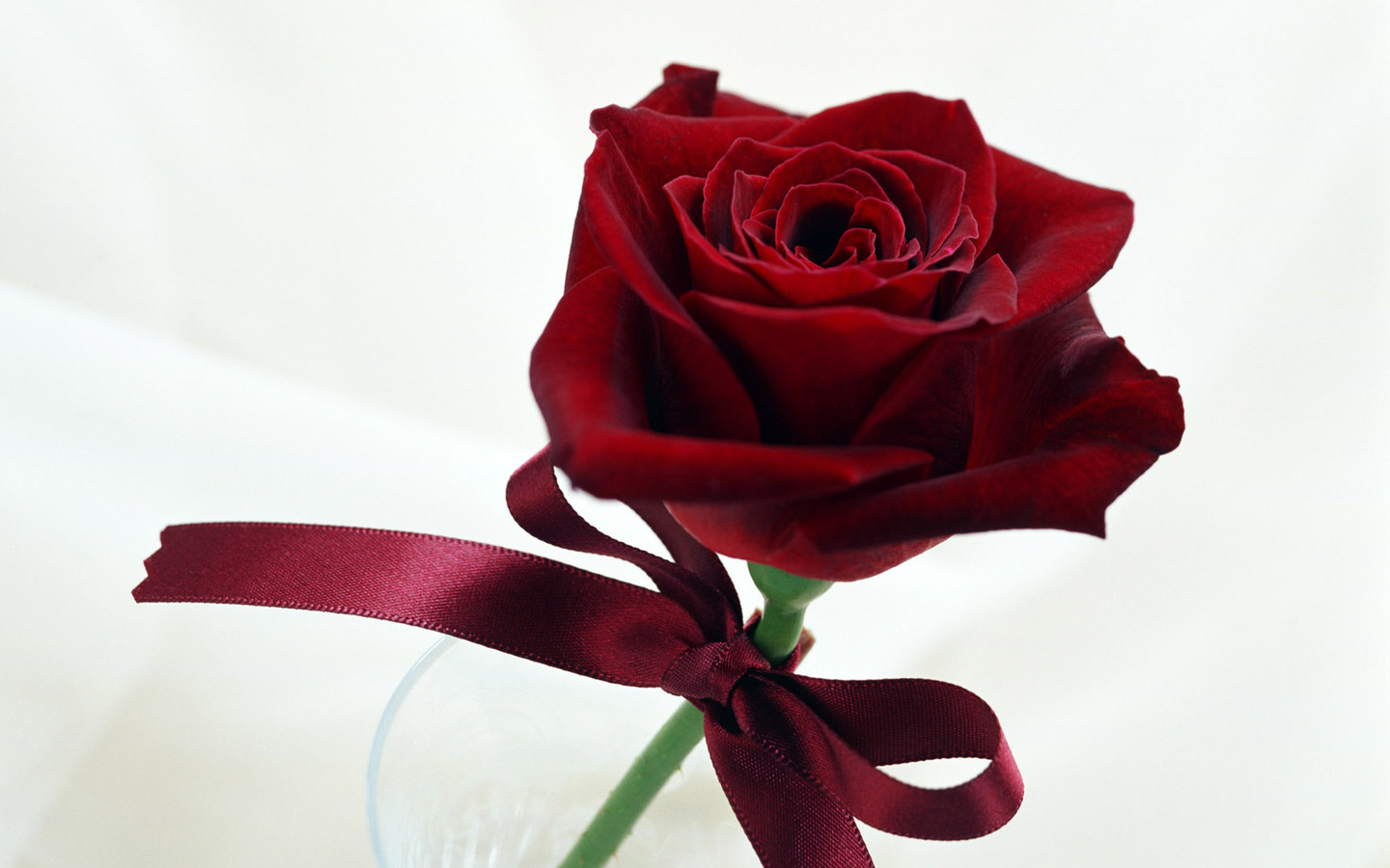 Dark Red Single Rose For Propose