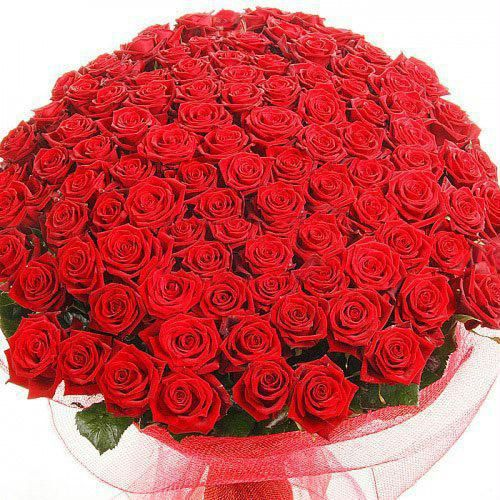 My Sweet 100 Dark Red Roses Bunch