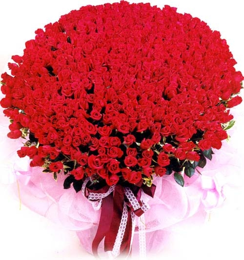 250 Fresh Red Roses Bunch