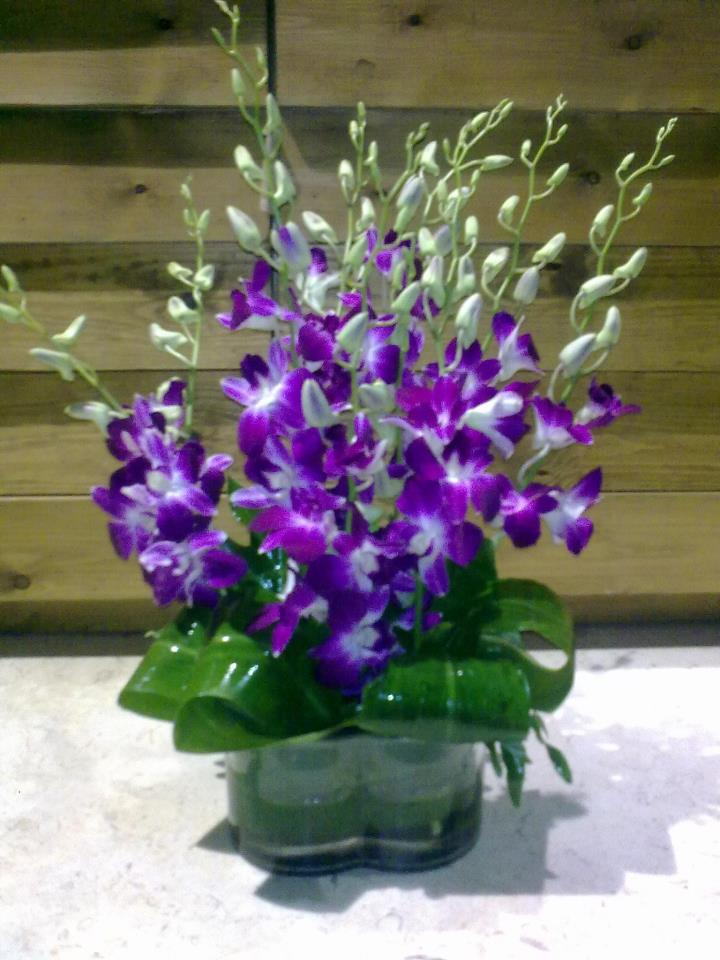 10 Orchids in Cube Vase