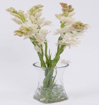 Tuberose in Vase