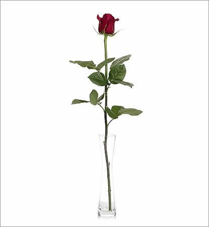 Single Rose in a Beautiful Glass Vase
