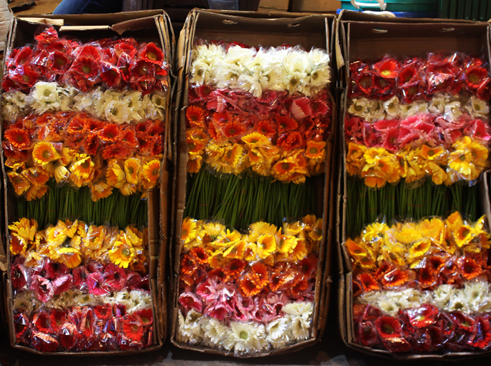 Gerbera Flowers in Bulk 1 Carton