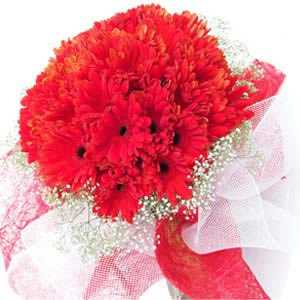 30 Red Gerbera Bunch