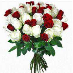 40 Red and White Roses