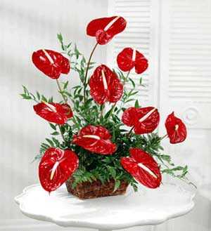 Unique Anthurium Arrangement