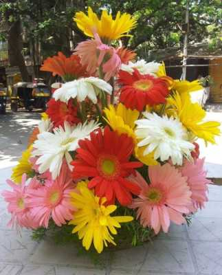 24 Mix Colour Gerberas Basket