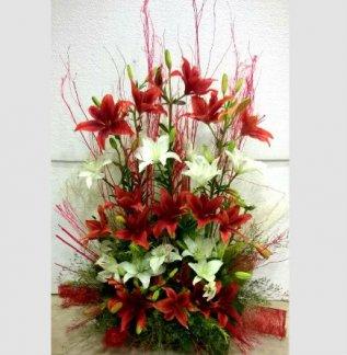 Evershine Lilies